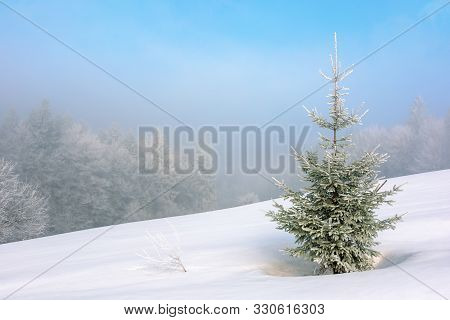 Little Fir Tree On A Snow Covered Meadow. Mysterious Winter Scenery In Foggy Weather Conditions. Dis