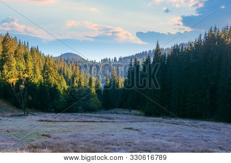 Beautiful Mountain Landscape At Sunrise In Autumn. Grassy Meadow Among The Coniferous Forest. Frosty