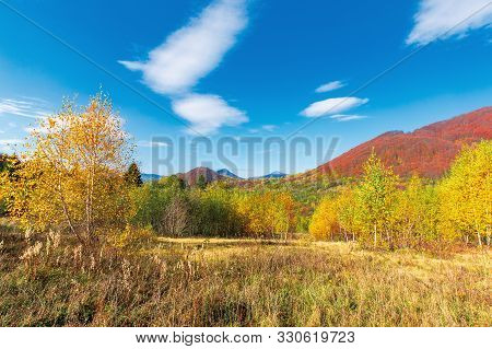 Beautiful Landscape In Fall Season. Birch Trees In Golden Foliage. Mountain In Autumn Colors. Two Pe