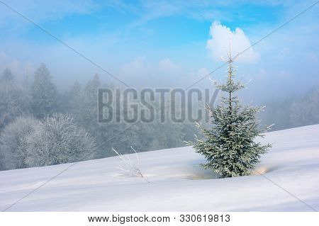Small Coniferous Tree On A Snow Covered Meadow. Magic Winter Scenery In Misty Weather Conditions. Di