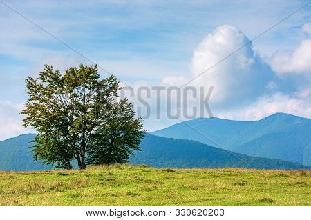 Trees On The Edge Of Grassy Meadow In Mountains. Beautiful Sunny Morning With Clouds Above The Dista