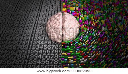Left Brain & Right Brain