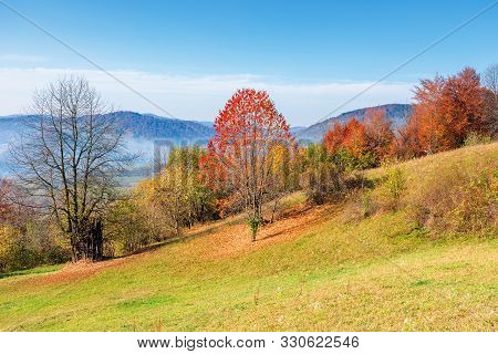 Sunny Forenoon In Mountainous Countryside. Wonderful Rural Landscape In Autumn. Trees In Colorful Fa