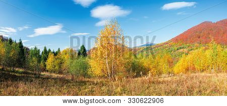 Beautiful Panoramic Landscape In Autumn. Birch Trees In Golden Foliage. Distant Mountain In Fall Col
