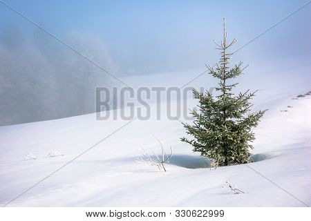 Little Spruce Tree On A Snow Covered Meadow. Mysterious Winter Scenery In Misty Weather Conditions.