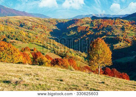 Mountainous Countryside In Fall Colors. Tree On The Hillside Meadow. Wonderful Dry Weather With Clou