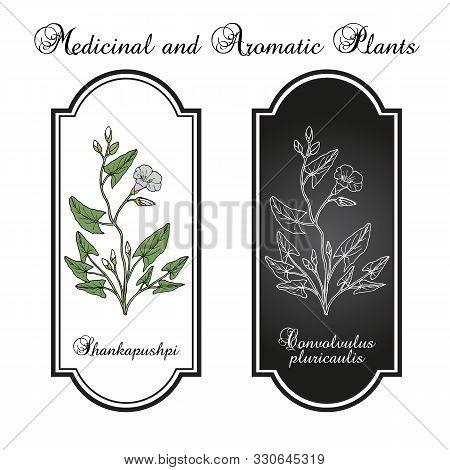 Shankapushpi Convolvulus Prostratus , Medicinal Plant. Hand Drawn Botanical Vector Illustration