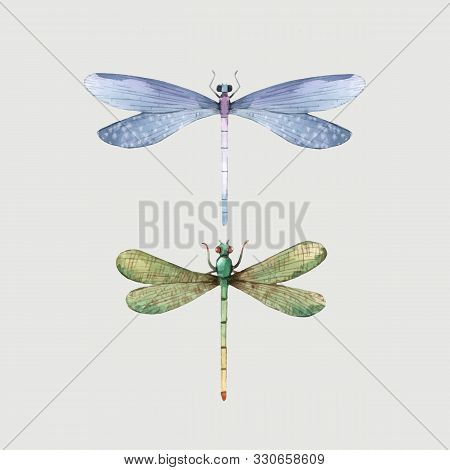 Watercolor Vector Hand Drawn Summer Dragonfly Insect Colourful Illustrations Set