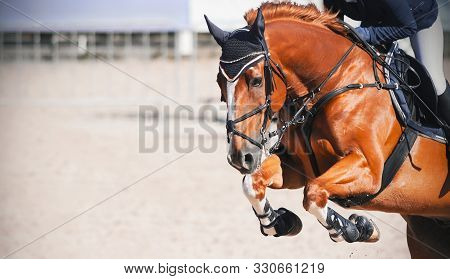 A Sorrel Beautiful Horse With A Rider In The Saddle Jumps High At A Show Jumping Competition On A Su