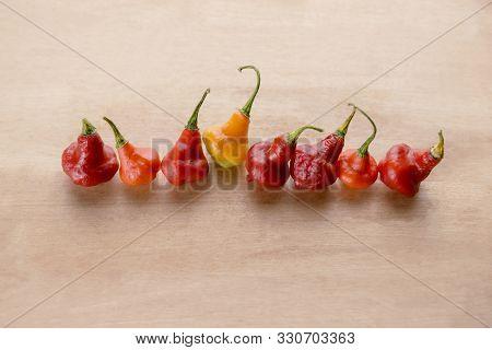 Red Australian Lantern Pepper Capsicum Chinense Little Rubber Nipple In A Row