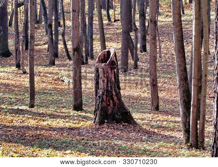 Hollow Stump In The Autumn Park. Day  Hollowˈhälō Hollow: варианты перевода Имя ПрилагательноеЧасто