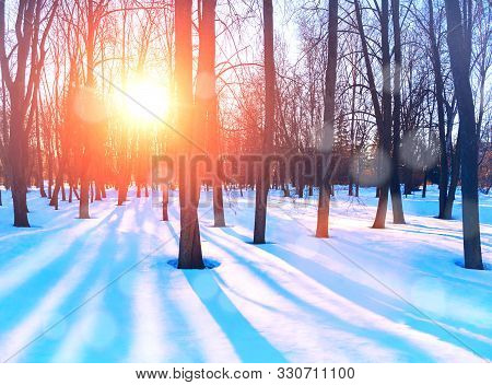 Winter landscape with snowy winter trees in the winter park - winter snowy sunset scene in warm tones. Colorful winter park, picturesque winter landscape scene. Winter morning nature