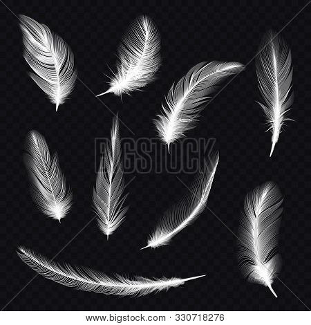 Set Of Bird Feather On Transparent Background. Indian Fur Or Dove Quill, Swan Plume. Set Of Isolated