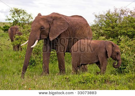 Two Elephants in Kenya