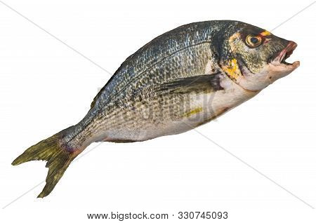Raw Gilt-head Sea Bream, Fish 3d Rendering With Realistic Texture Isolated On White Background