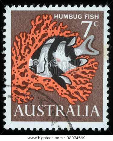 AUSTRALIA - CIRCA 1966: A stamp printed in Australia shows image of a humbug fish, circa 1966
