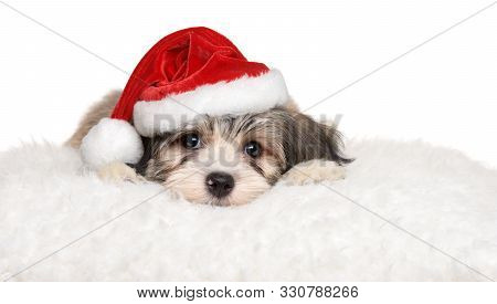 Cute Havanese Puppy Lying On A White Pillow In Santa's Hat