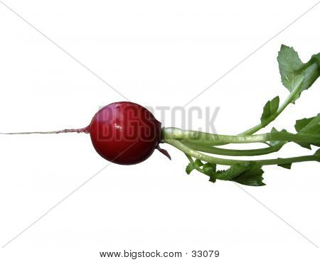 Radish: Red And Green