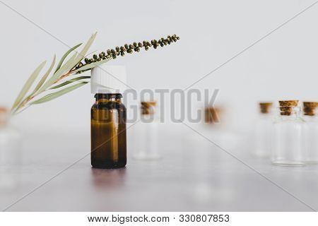 Natural Beauty And Wellness, Essential Oil Bottle With Tiny Branch Of Leaves And Other Bottles