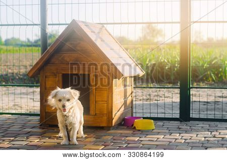 poster of Beautiful white pooch dog near the booth on a sunny day. House for an animal. Selective focus
