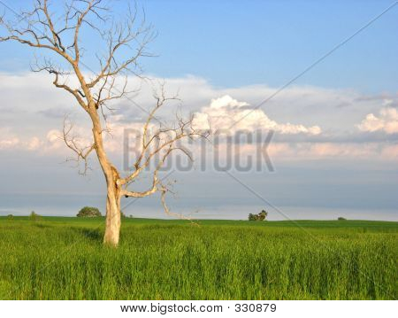 Lone Tree Existence