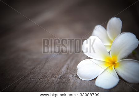 white  frangipani flowers on brown  wood texture with fresh dew water