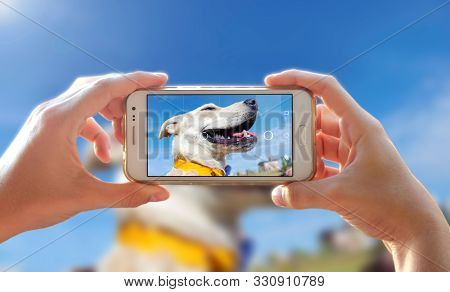 Photographing A Dog. Woman Taking A Photo With The Camera Of A Smartphone. A Person Photographing He