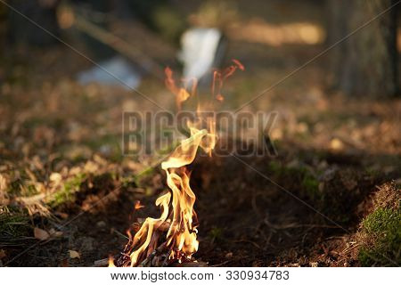 Open Bonfire In Forest, Making Forbidden To Barbeque Or Making Bonfire. Photo Of Bonfire In Forest O