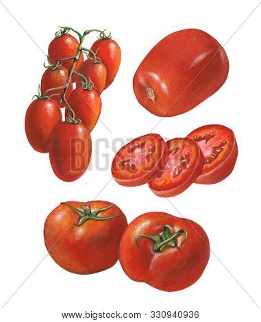 Some tomato varieties. Mixed media illustration on paper.