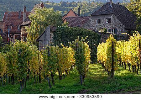 Vineyards Around The Village Of Kaysersberg. Kaysersberg Is One Of The Finest Wine-growing Areas In