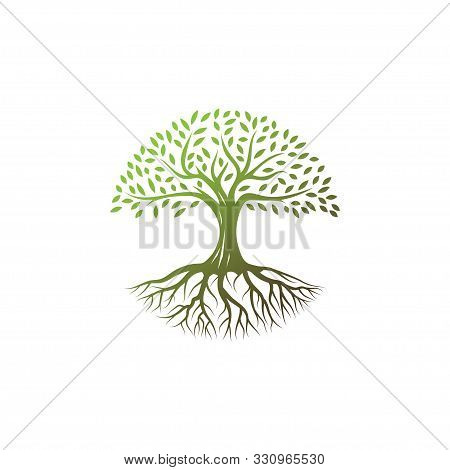 Tree Logo Design Vector Template.river Tree Illustration