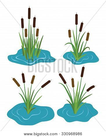 Vector Set Of Typhaceae Marsh Herb With Leaves And Spike Flowers. Colorful  Reed Grass Symbols Isola
