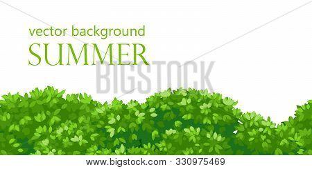Seamless Green Bushes. Background Bush Leaves, Vector Bush