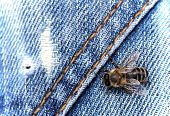 Bee on a jeans poster