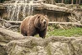 Lets go wild for wildlife. Undomesticated animal species or wildlife. Wild brown bear in natural environment. Raising awareness of the worlds wild fauna on world wildlife day. Wildlife matters. poster