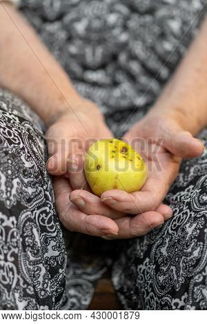Old Woman Hands With Wrinkled Skin Holds Yellow Apple. Selective Focus And Image With Shallow Depth