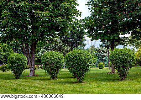 Green Deciduous Bush In Backyard Garden Bed, Landscaped Park With Brk Tree Mulching Plants And Meado