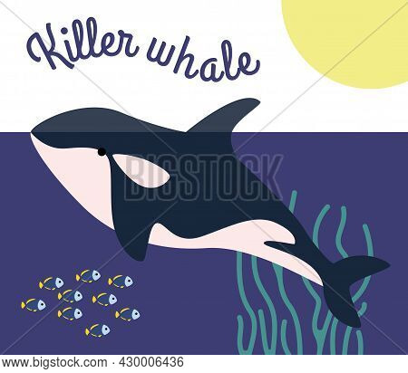 The Blue Predatory Killer Whale Swims In The Sea Underwater World.  Sea Creatures.  Ocean Dwellers A