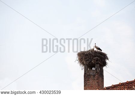 Stork Bird Standing On Its Wooden Nest, Installed On An Old Chimney On A House Building, During A Su