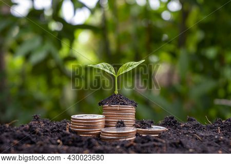 A Sapling Growing On A Pile Of Coins Has A Natural Backdrop. Money-saving Ideas And Economic Growth