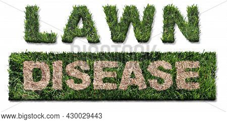 Lawn Disease Symbol As Grub Damage As Chinch Larva Damaging Grass Roots Causing A Brown Patch And Dr