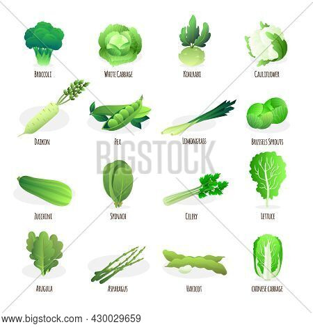 Green Vegetables Flat Icons Collection With Broccoli Spinach Pea Pod Cabbage And Celery Abstract Iso