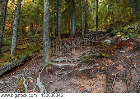 Steep Path Through Ancient Forest. Rocks And Roots On The Ground. Autumn Season In Apuseni Natural P
