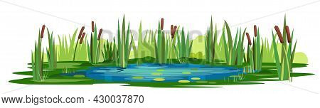 Swamp Landscape With Reed And Cattail. Isolated Element. Horizontally Composition. Overgrown Pond Sh
