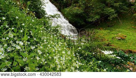 Gudvangen-naeroyfjorden, Norway. Wild Flowers Blooming Near Waterfall Tuftofossen In Spring. Tuftefo