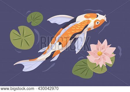 Japanese Koi Swimming In Pond With Flower. Japan Carp In Asian Water Garden With Waterlily. Top View