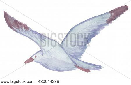 Watercolor Drawing Of A Flying Seagull. Raster Clipart Of Blue Bird With Outstretched Wings Isolated
