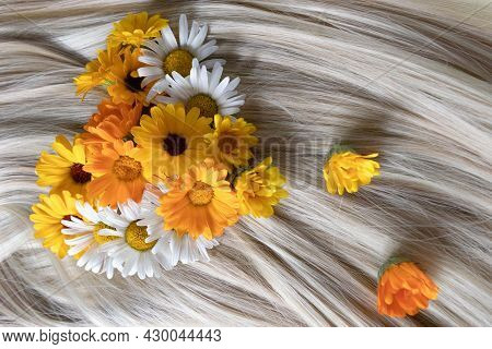 Blond Shiny Hair With Chamomile Flowers On It. Hair Care Concept.