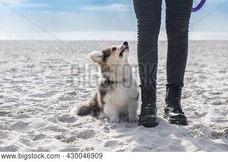 Corgi Puppy On Obedience. Lesson On The Beach, Selective  Soft Focus.