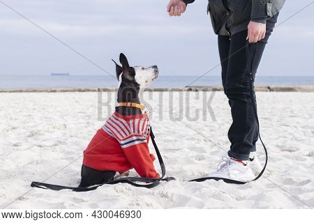 Dog Obedience Concept.  The Dog Obeys The Trainer.